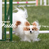 Agility ARC Nationals May 15 2017MelissaFaithKnightFaithPhotographyNV_7827