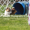 Agility ARC Nationals May 15 2017MelissaFaithKnightFaithPhotographyNV_7922