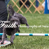 Agility ARC Nationals May 15 2017MelissaFaithKnightFaithPhotographyNV_7862