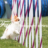 Agility ARC Nationals May 15 2017MelissaFaithKnightFaithPhotographyNV_7814