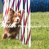 Agility ARC Nationals May 15 2017MelissaFaithKnightFaithPhotographyNV_7896