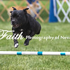 Agility ARC Nationals May 15 2017MelissaFaithKnightFaithPhotographyNV_7979