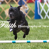 Agility ARC Nationals May 15 2017MelissaFaithKnightFaithPhotographyNV_7977