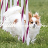 Agility ARC Nationals May 15 2017MelissaFaithKnightFaithPhotographyNV_7820