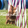 Agility ARC Nationals May 15 2017MelissaFaithKnightFaithPhotographyNV_7888