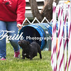 Agility ARC Nationals May 15 2017MelissaFaithKnightFaithPhotographyNV_7960