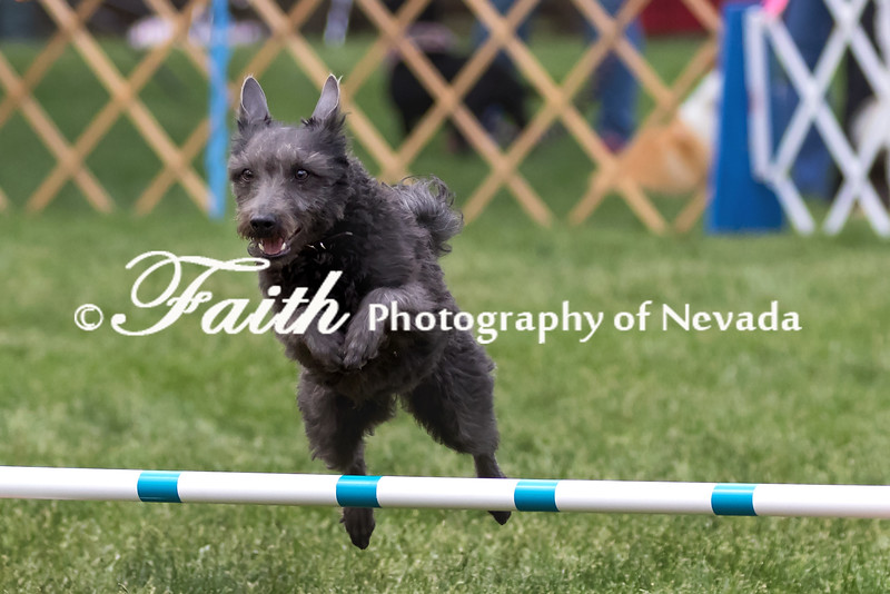Agility ARC Nationals May 15 2017MelissaFaithKnightFaithPhotographyNV_7865
