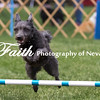 Agility ARC Nationals May 15 2017MelissaFaithKnightFaithPhotographyNV_7865