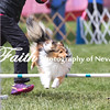 Agility ARC Nationals May 15 2017MelissaFaithKnightFaithPhotographyNV_7942