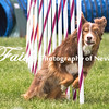 Agility ARC Nationals May 15 2017MelissaFaithKnightFaithPhotographyNV_7893