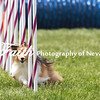 Agility ARC Nationals May 15 2017MelissaFaithKnightFaithPhotographyNV_7931