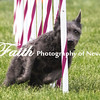 Agility ARC Nationals May 15 2017MelissaFaithKnightFaithPhotographyNV_7846