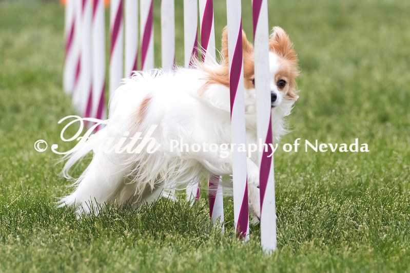 Agility ARC Nationals May 15 2017MelissaFaithKnightFaithPhotographyNV_7819