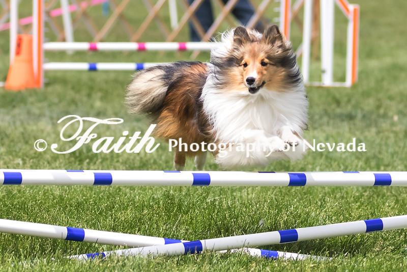 Agility ARC Nationals May 15 2017MelissaFaithKnightFaithPhotographyNV_7946