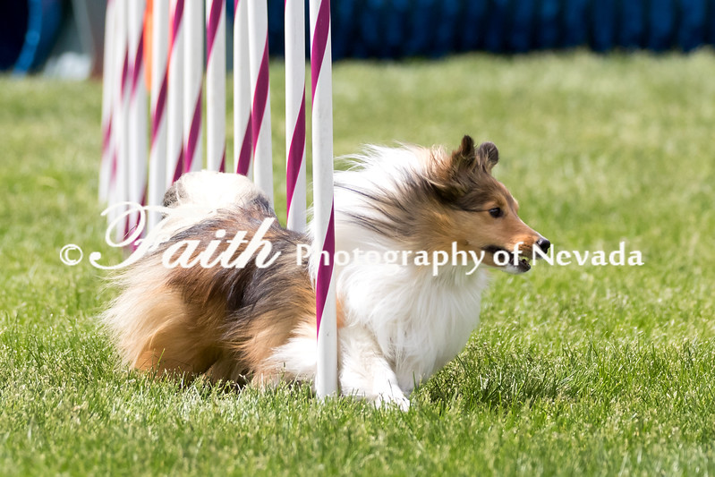 Agility ARC Nationals May 15 2017MelissaFaithKnightFaithPhotographyNV_7928