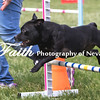 Agility ARC Nationals May 15 2017MelissaFaithKnightFaithPhotographyNV_7991