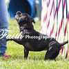 Agility ARC Nationals May 15 2017MelissaFaithKnightFaithPhotographyNV_7972