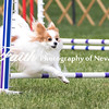 Agility ARC Nationals May 15 2017MelissaFaithKnightFaithPhotographyNV_7824