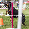 Agility ARC Nationals May 15 2017MelissaFaithKnightFaithPhotographyNV_8493