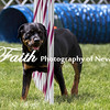 Agility ARC Nationals May 15 2017MelissaFaithKnightFaithPhotographyNV_8465