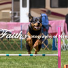 Agility ARC Nationals May 15 2017MelissaFaithKnightFaithPhotographyNV_8438
