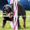 Agility ARC Nationals May 15 2017MelissaFaithKnightFaithPhotographyNV_8380