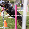 Agility ARC Nationals May 15 2017MelissaFaithKnightFaithPhotographyNV_8492