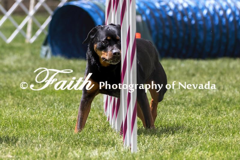 Agility ARC Nationals May 15 2017MelissaFaithKnightFaithPhotographyNV_8562