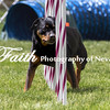 Agility ARC Nationals May 15 2017MelissaFaithKnightFaithPhotographyNV_8562