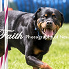 Agility ARC Nationals May 15 2017MelissaFaithKnightFaithPhotographyNV_8383