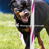 Agility ARC Nationals May 15 2017MelissaFaithKnightFaithPhotographyNV_8385