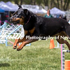 Agility ARC Nationals May 15 2017MelissaFaithKnightFaithPhotographyNV_8586