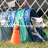 Agility ARC Nationals May 15 2017MelissaFaithKnightFaithPhotographyNV_8521