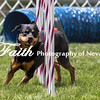 Agility ARC Nationals May 15 2017MelissaFaithKnightFaithPhotographyNV_8421