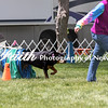 Agility ARC Nationals May 15 2017MelissaFaithKnightFaithPhotographyNV_8573