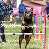 Agility ARC Nationals May 15 2017MelissaFaithKnightFaithPhotographyNV_8348