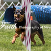 Agility ARC Nationals May 15 2017MelissaFaithKnightFaithPhotographyNV_8418