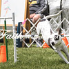 Agility ARC Nationals May 15 2017MelissaFaithKnightFaithPhotographyNV_8502