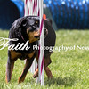 Agility ARC Nationals May 15 2017MelissaFaithKnightFaithPhotographyNV_8564