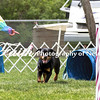 Agility ARC Nationals May 15 2017MelissaFaithKnightFaithPhotographyNV_8367