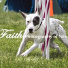 Agility ARC Nationals May 15 2017MelissaFaithKnightFaithPhotographyNV_8509