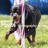 Agility ARC Nationals May 15 2017MelissaFaithKnightFaithPhotographyNV_8386