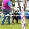 Agility ARC Nationals May 15 2017MelissaFaithKnightFaithPhotographyNV_8372
