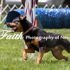 Agility ARC Nationals May 15 2017MelissaFaithKnightFaithPhotographyNV_8426