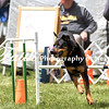 Agility ARC Nationals May 15 2017MelissaFaithKnightFaithPhotographyNV_8335