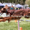 Agility ARC Nationals May 15 2017MelissaFaithKnightFaithPhotographyNV_8686