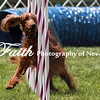 Agility ARC Nationals May 15 2017MelissaFaithKnightFaithPhotographyNV_8660