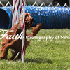 Agility ARC Nationals May 15 2017MelissaFaithKnightFaithPhotographyNV_8656