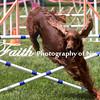 Agility ARC Nationals May 15 2017MelissaFaithKnightFaithPhotographyNV_8680