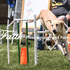 Agility ARC Nationals May 15 2017MelissaFaithKnightFaithPhotographyNV_8597